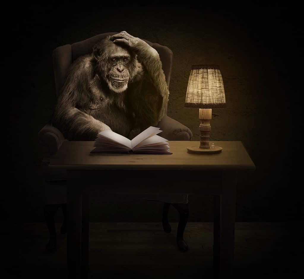 monkey 1757972 1280 1024x941 - Wie arbeite ich?